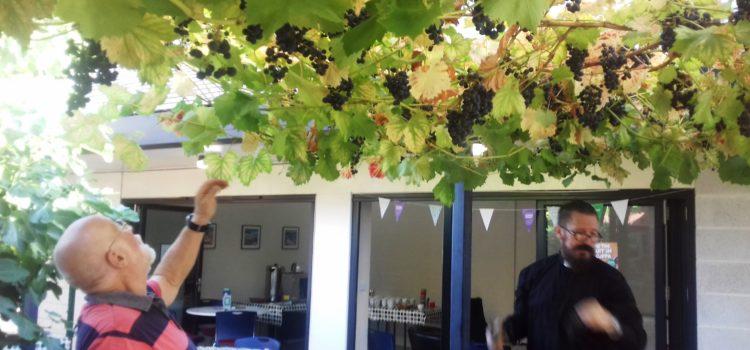 All Saints Wine 2019 – Grape picking